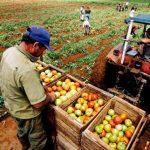 PRODUCCIÓN AGROPECUARIA CRECIÓ 1.58% EN EL PRIMER TRIMESTRE DEL AÑO